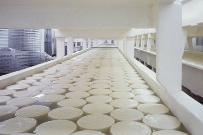 process manufacturing ERP - CHEESE