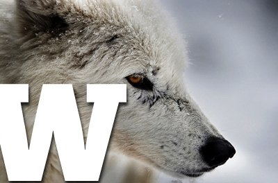 a to z wolf erp image